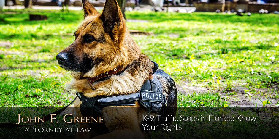 K-9 Traffic Stops in Florida: Know Your Rights